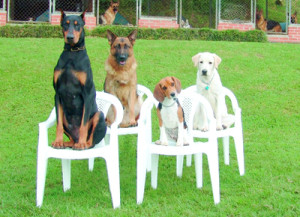 dog-training-tucson-photo