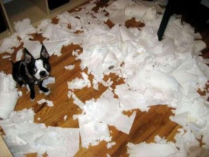 Home-alone-dog-destroys-toilet-paper